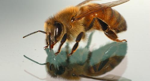 Mesilane autoklaasil