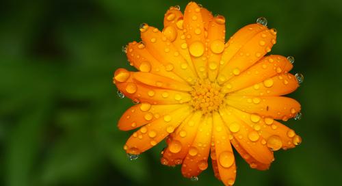 vihmamärg
