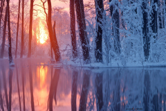Talvine allikas