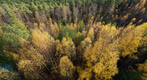 Sügisvärvides mets