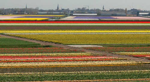 Kevadine Holland