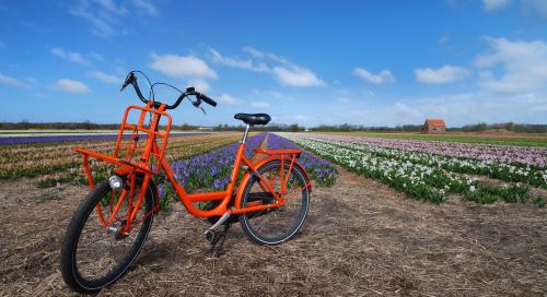 Oranz jalgratas